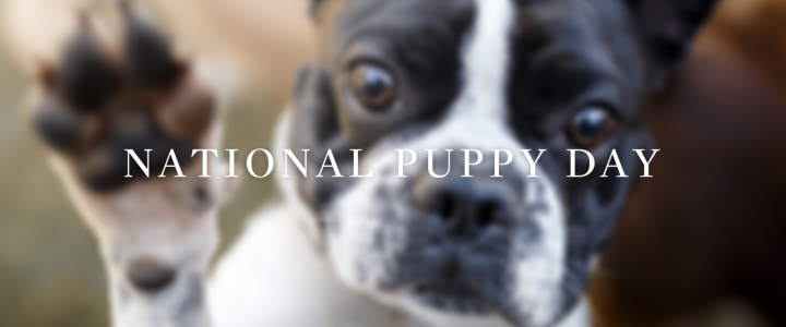 Happy National Puppy Day | The Pups of Atlantic Sotheby's